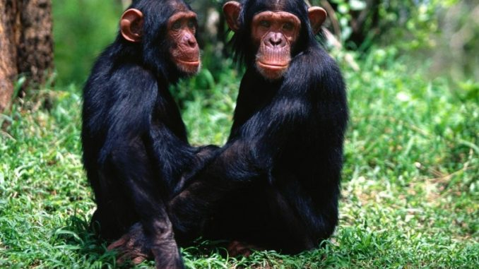 que-comen-los-monos